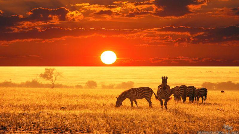 South Africa safari package Lusaka | powered by absolutezambiasafaris.net
