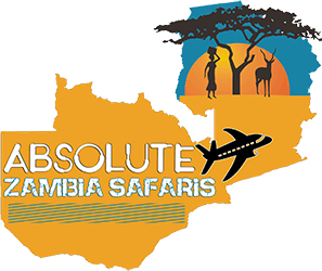 Absolute Zambia Safaris